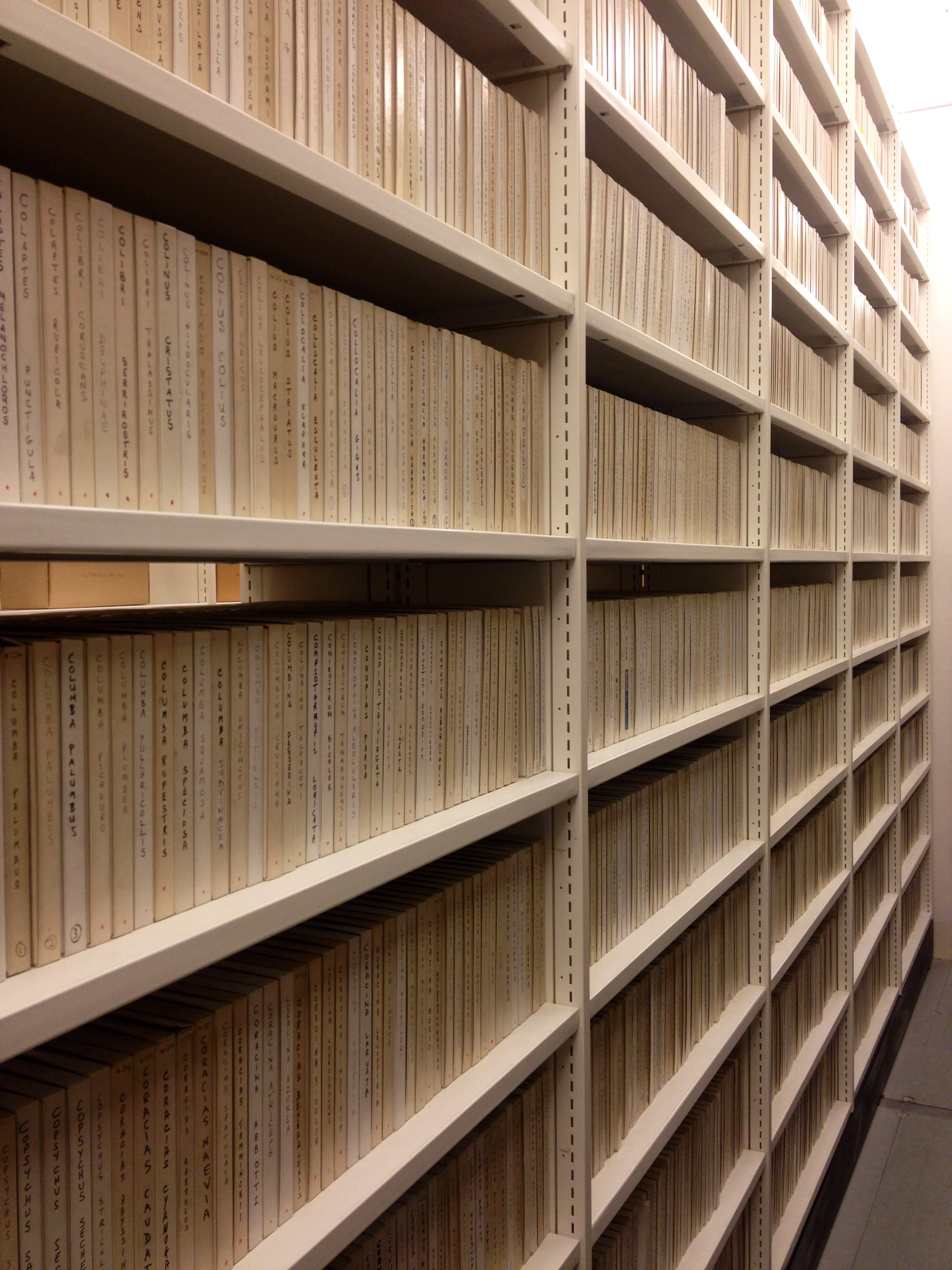 Image of library records on shelves